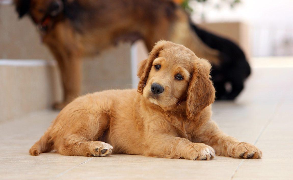 dog-785193_1280